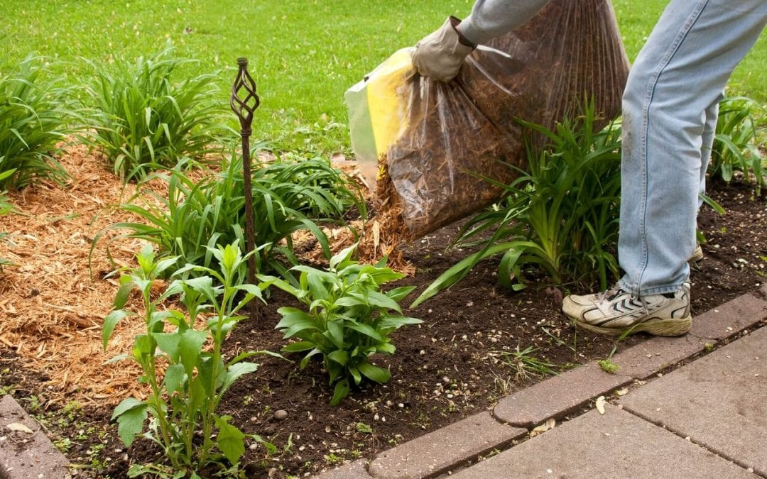 5 Tips for Preventing Termites When Gardening